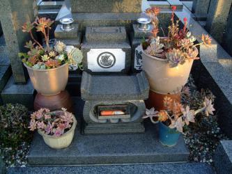 お墓の多肉寄せ植え~♪寒さに強そうな寄せ植えだけ残して引き上げます。2012.12.07
