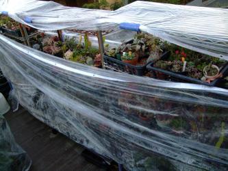 ビニール巻きにした多肉棚は・・・日が登ると高温温室になってしまいます(´ヘ`;)毎朝10時には開いて通気・換気し温度を下げます♪2012.12.09