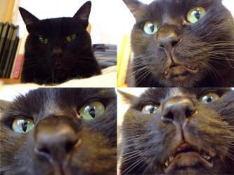 黒猫のタコ~ちゃんです♪ちょっと~?んにゃ?大分怖~い(◎皿◎)コ~ワ~イ~2012.03.01