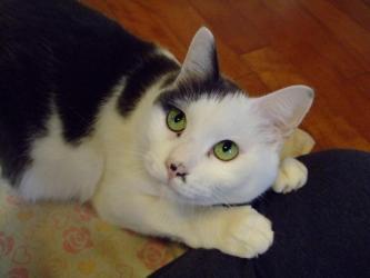 歌舞伎役者ではありませぬ!家猫~オチョビ君です!デブのクセに小心です!2012.04.19