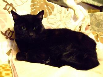 モグロフクゾウではありませぬ!若ネコなのにタコ~(多幸)ちゃん!です2012.04.19