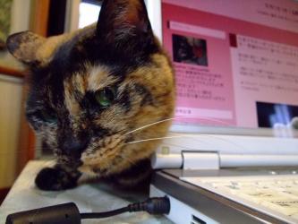 唯一の雌猫ちゃん~まだら~ゴマ子ちゃん♪PCにスリスリちゅう~2012.05.29