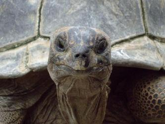 ガラパゴスゾウガメ~あっぷっぷ~~~~(´ヘ`;)怖~い♪けれど~すんご~い!甲羅だけでも1mありそうです!もう動物の域を超えて恐竜に見えてきます!♪すごいです!2012.06.24~熱川バナナ・ワニ園分園にて!