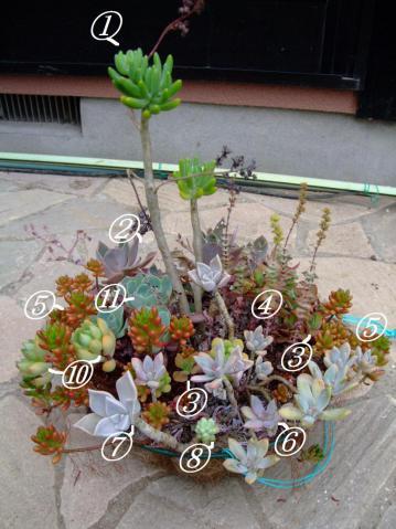多肉植物寄せ植え~吊鉢~セダム・グラプトペタルム・エケベリア・クラッスラなど色とりどり♪2012.07.12