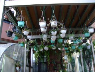ベランダ付き駐車場の屋根下には吊鉢いっぱい吊るしています(´ヘ`;)2012.10.01