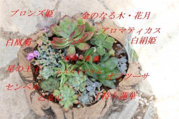コルクでできた植木鉢に寄せ植えを作ってみました~!1年後どうなっているでしょう♪観察してみま~す!