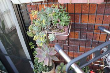 2階ベランダの3年くらいそのまんまの寄せ植え~茂り始めました♪2012.05.24