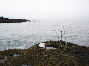 20100418fish-02.jpg