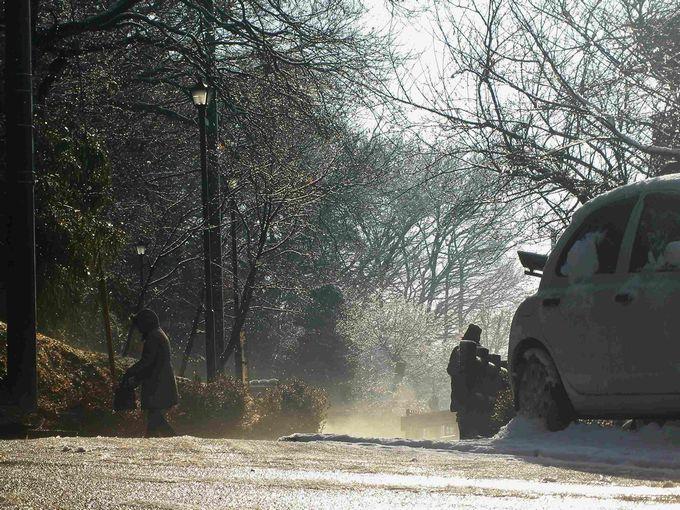 雪が降った朝03