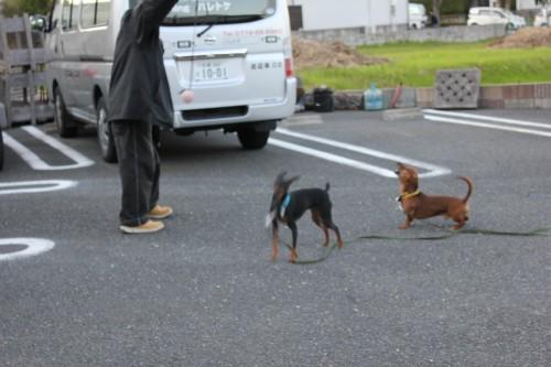 2011-10-27 27 大志園ラン 063x500 (6)