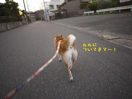 P1180463.jpg
