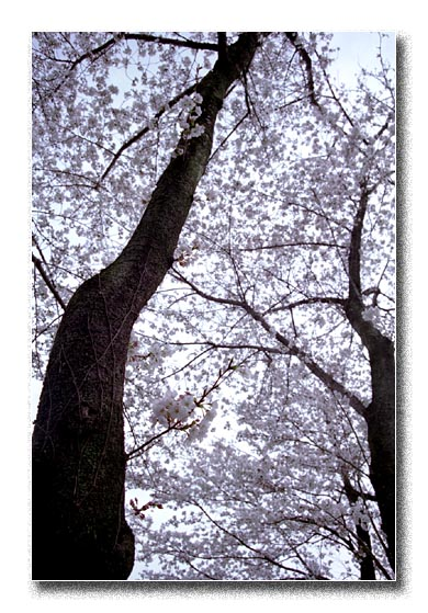 20080330.jpg