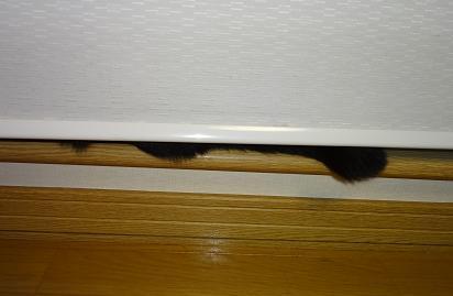 カーテンの隙間から毛・・・