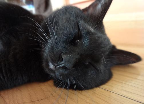まめ;床で寝