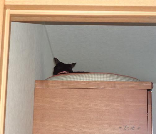 まめ;猫ベッド