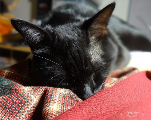 まめ:布の上で寝る