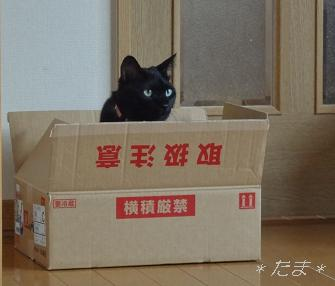 まめ;箱に