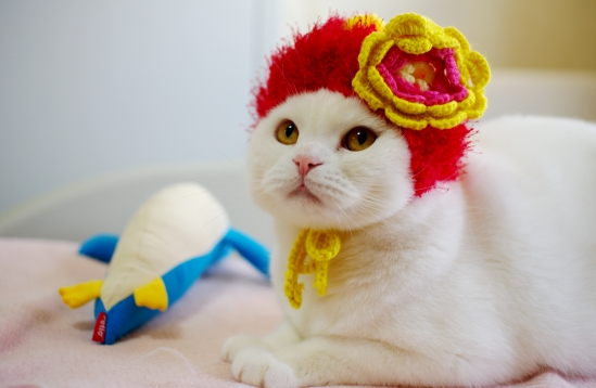 赤い帽子似合ってますか??
