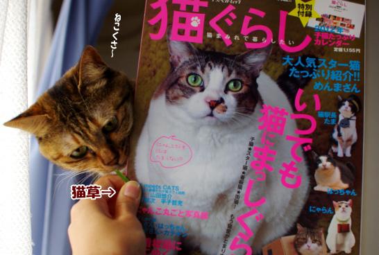 猫草と雑誌ピー
