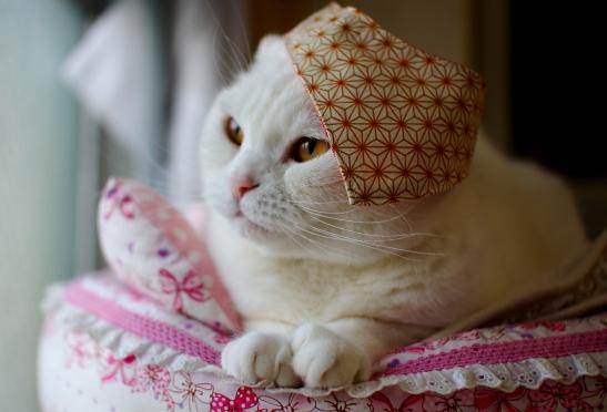 僕は帽子としてつけます