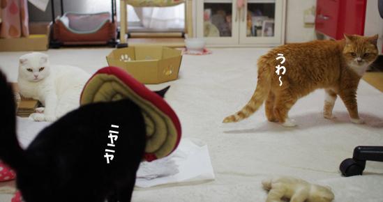 クーちゃんが^¥ds--あsssssコピー