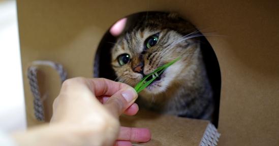 わ~新鮮な猫草だーーーsだー^だs-だっさささss
