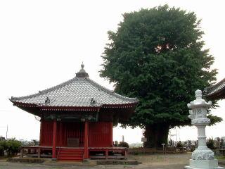 群馬県太田市 浄蔵時の大銀杏1