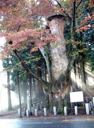 群馬県吾妻郡中之城町五反田 親都神社の大ケヤキ1