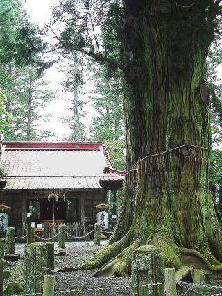 栃木県 塩原八幡宮 逆杉⑧1