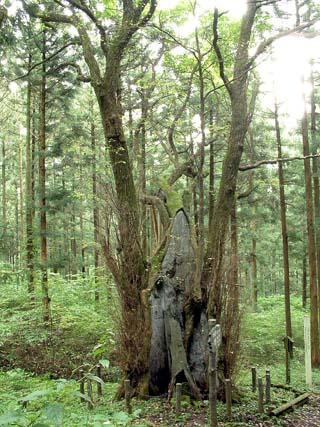 栃木県 木の俣地蔵の桂③