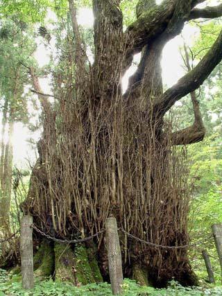 栃木県 木の俣地蔵の桂②