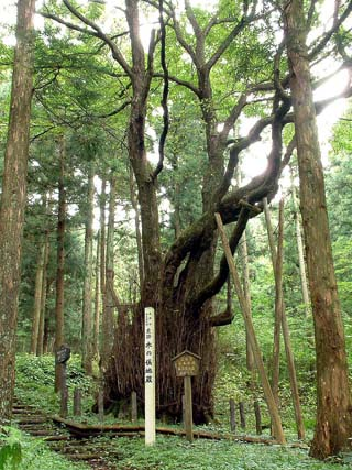 栃木県 木の俣地蔵の桂