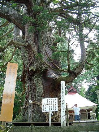 新潟県上越市 虫川の大杉1