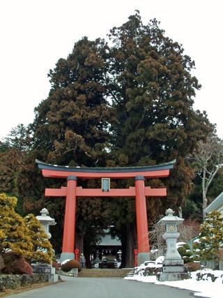 山梨県 河口浅間神社の大杉①2011.2_edited-1