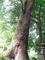茨城県 香取八坂神社②2012_0524