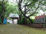 茨城県 地蔵ケヤキ 高源寺①2012_0524