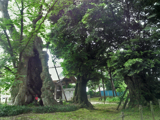 茨城県 地蔵ケヤキ⑦2012_0524