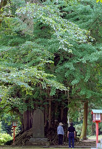 埼玉県東松山市 正法寺の大銀杏⑥2012_0624