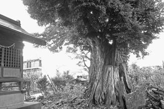 2012_0904_椎の木稲荷-DSC03478