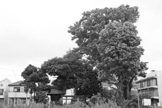 2012_0904_椎の木稲荷-DSC03466