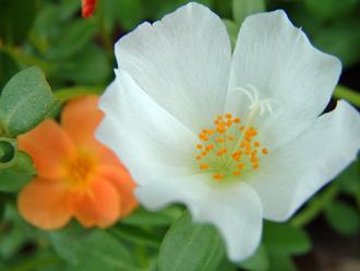 2012_0917_そうか公園花②