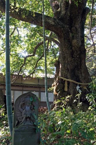 2012_1021埼玉県 地蔵院のタブノキ