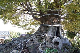 121108埼玉 宮鼻八幡神社⑥