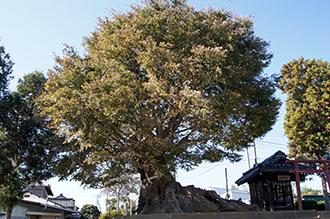 121108埼玉 宮鼻八幡神社⑦