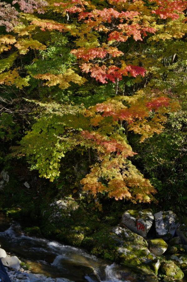 紅葉と渓流HDR