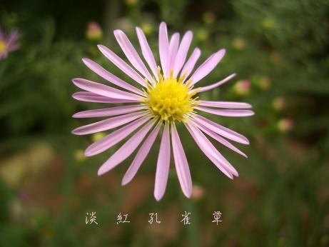 f_20100919100626.jpg