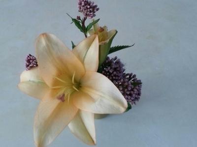 十一月の花①