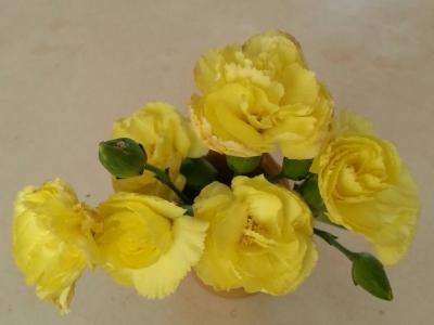 十一月の花④