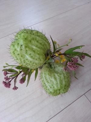 今月の花③