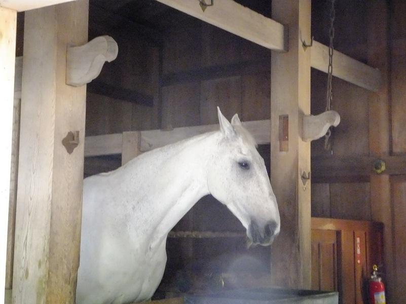厩には生きた神馬が二時間半勤務中